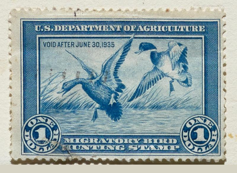 Conservation Art: Federal Duck Stamps & Prints at Stark Museum of Art